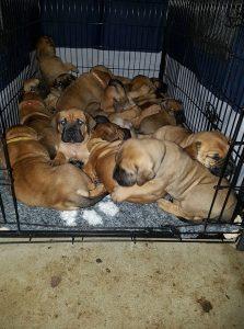 Ten pups